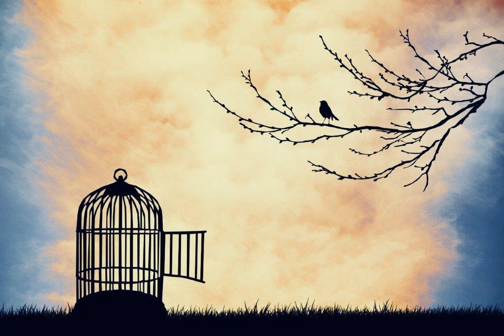 Znalezione obrazy dla zapytania freedom