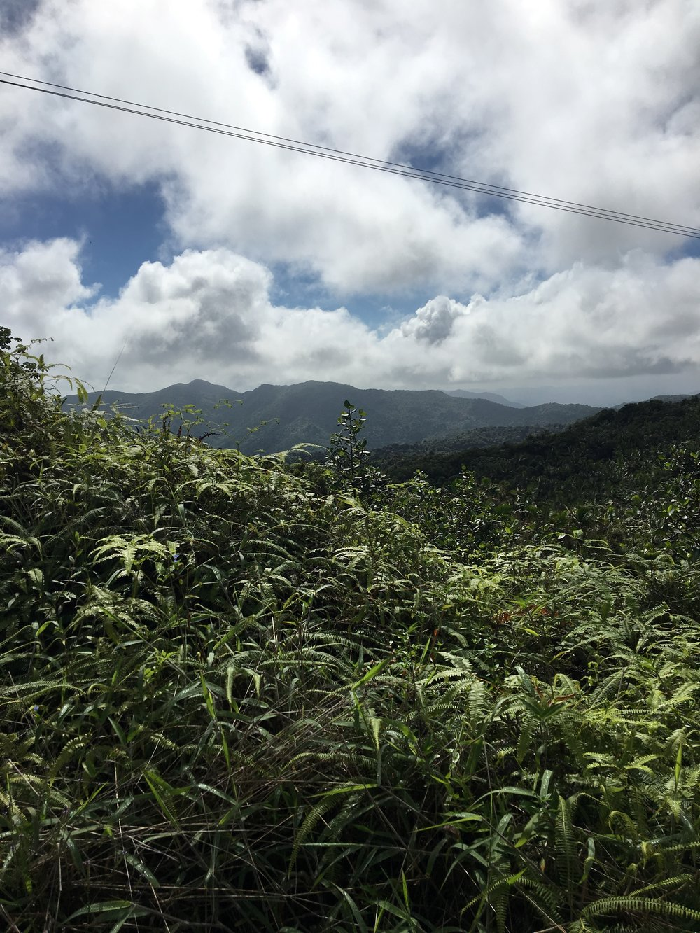 View of the Toro Negro mountain range, where the majority of the sharp-shinned hawk nests were located.