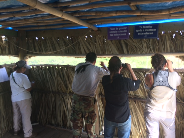 Hawkwatching from inside the raptor banding station outside of Chichicaxtle along the Carribean coast.