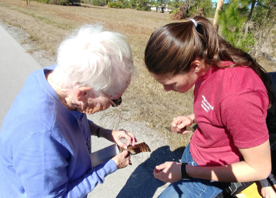 Sue teaches Kirsten how to measure and band a recently trapped kestrel.