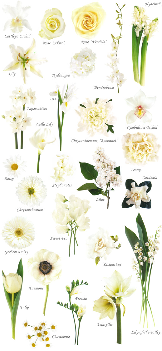 Wedding Flowers Bouquet White