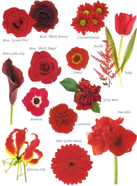 Wedding Flowers Bouquet Red