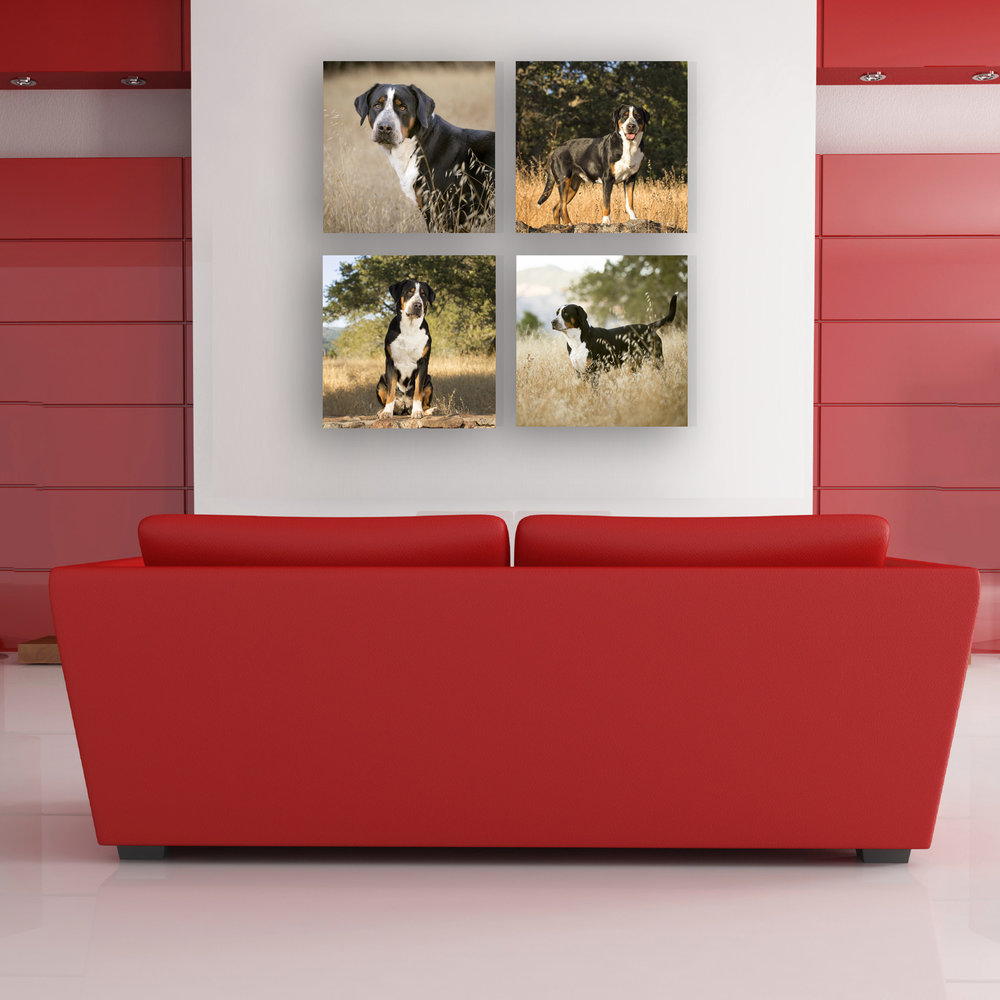 "Let your dog have a whole wall, with a quad or triptych of Fuji luster photographic prints mounted on 3/4"" black standouts, or gallery canvas wrap."