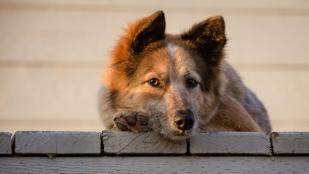 30 COPYRIGHTED MATERIAL DO NOT COPY Source- LIZ GREER DOG PHOTOGRAPHY lizgreer.com.jpg