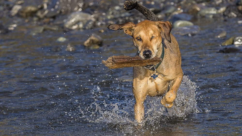 23 COPYRIGHTED MATERIAL DO NOT COPY Source- LIZ GREER DOG PHOTOGRAPHY lizgreer.com.jpg