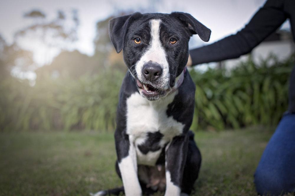 10 COPYRIGHTED MATERIAL DO NOT COPY Source- LIZ GREER DOG PHOTOGRAPHY lizgreer.com.jpg