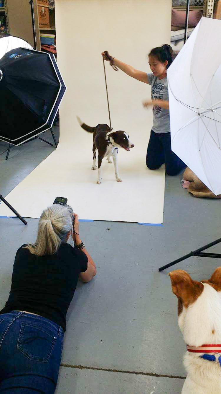 14 COPYRIGHTED MATERIAL DO NOT COPY Source- LIZ GREER DOG PHOTOGRAPHY lizgreer.com.jpg