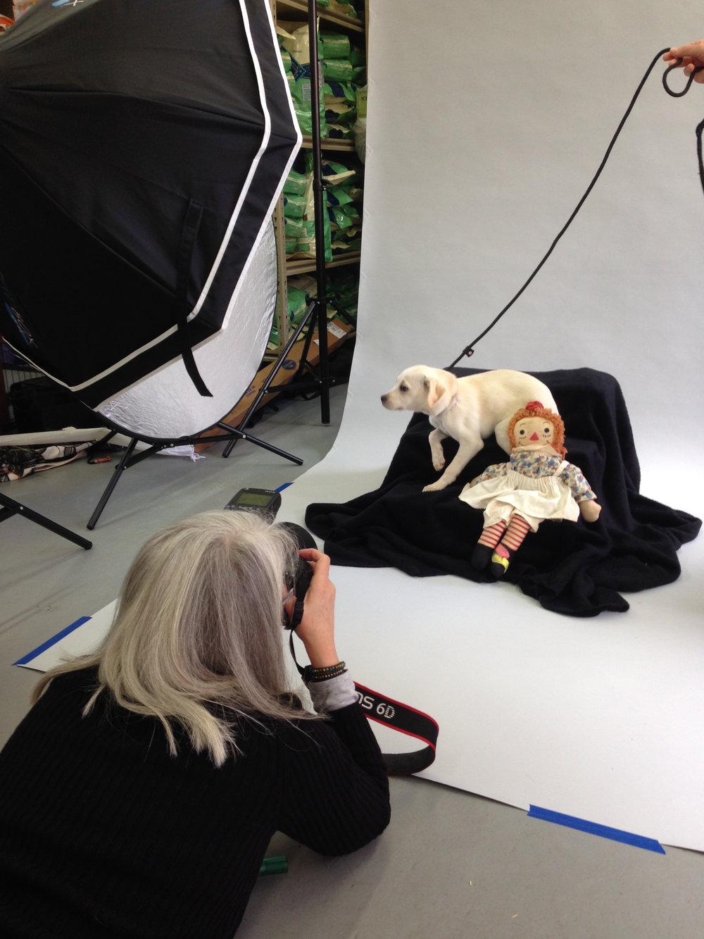 5 COPYRIGHTED MATERIAL DO NOT COPY Source- LIZ GREER DOG PHOTOGRAPHY lizgreer.com.jpg