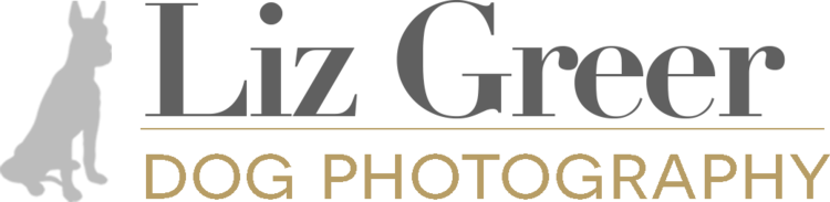 Liz Greer Dog Photography