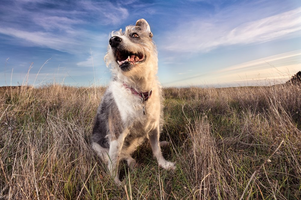 22018COPYRIGHTED MATERIAL LIZ GREER DOG PHOTOGRAPHY DO NOT USE WITHOUT PERMISSION.JPG