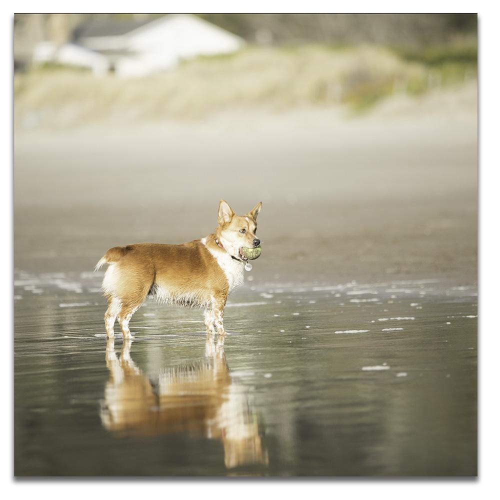 flynn on beach for web.jpg