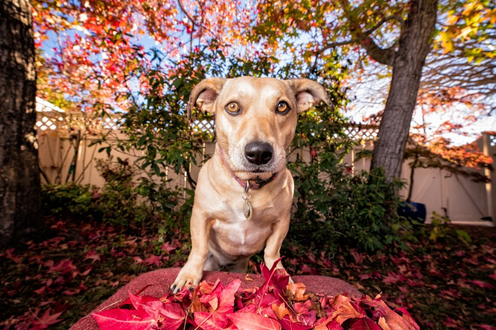 Sophie - copyright 2018 Liz Greer Dog Photography all rights reserved.JPG