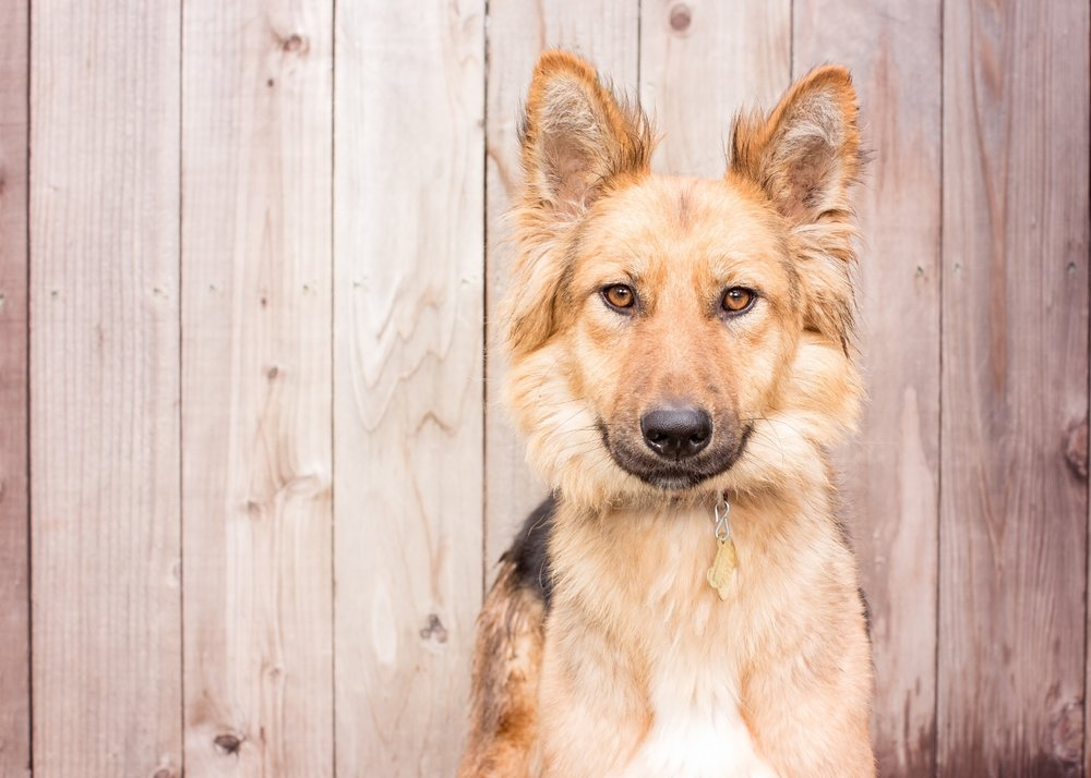 12018COPYRIGHTED MATERIAL LIZ GREER DOG PHOTOGRAPHY DO NOT USE WITHOUT PERMISSION-2.JPG