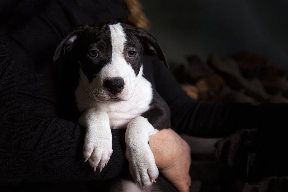 18 COPYRIGHTED MATERIAL DO NOT COPY Source- LIZ GREER DOG PHOTOGRAPHY lizgreer.com.jpg