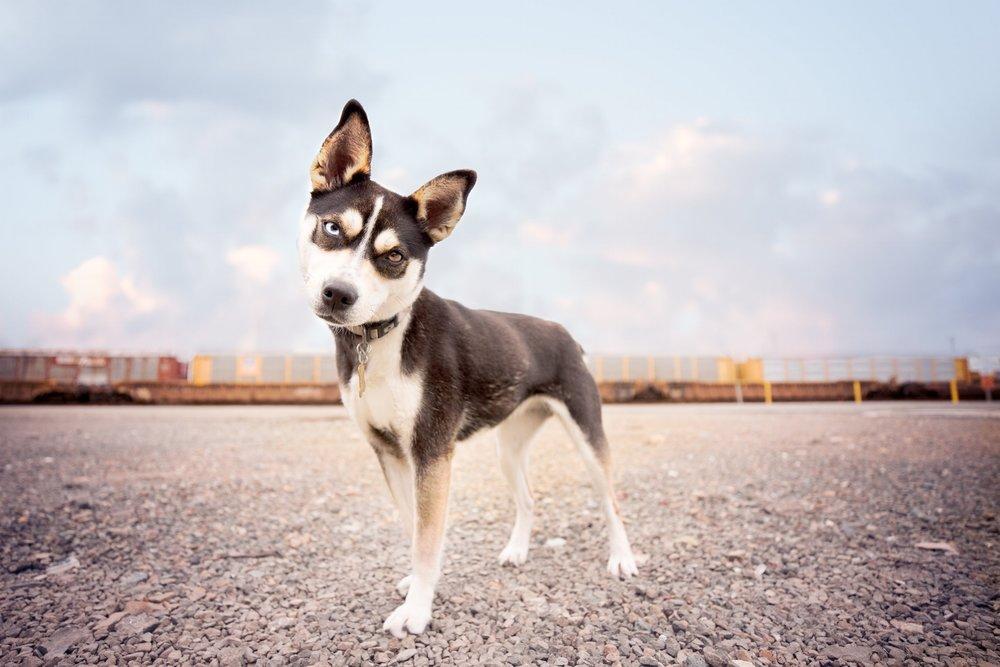 15 COPYRIGHTED MATERIAL DO NOT COPY Source- LIZ GREER DOG PHOTOGRAPHY lizgreer.com.jpg