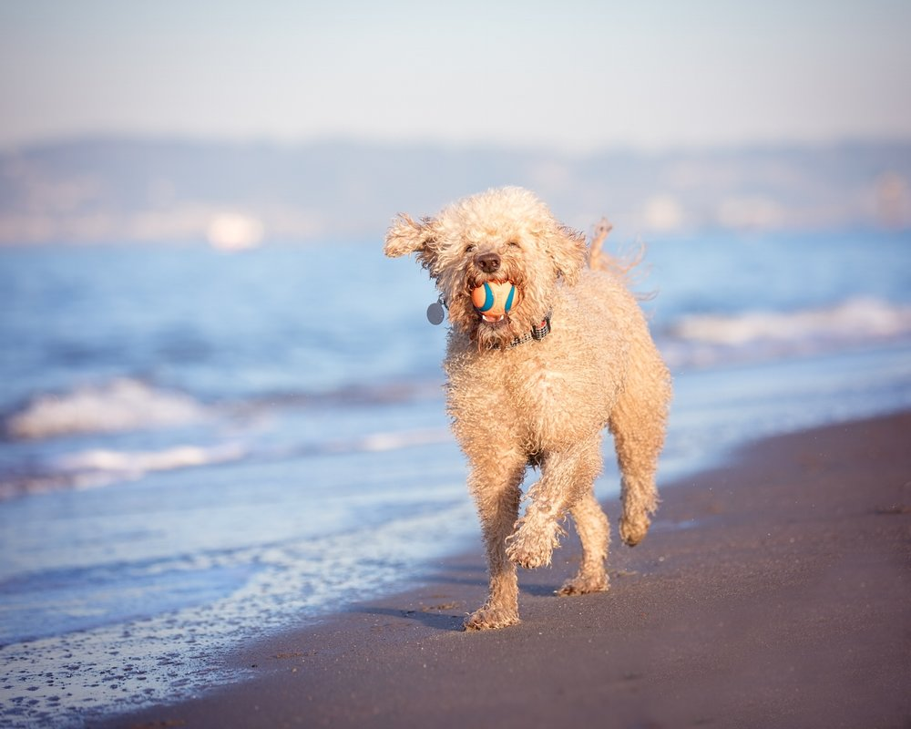 12017COPYRIGHTED MATERIAL LIZ GREER DOG PHOTOGRAPHY DO NOT USE WITHOUT PERMISSION-3.JPG