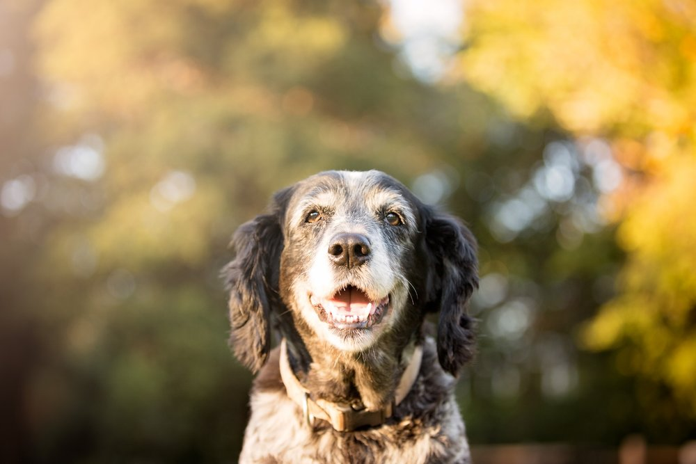 22017COPYRIGHTED MATERIAL LIZ GREER DOG PHOTOGRAPHY DO NOT USE WITHOUT PERMISSION.JPG