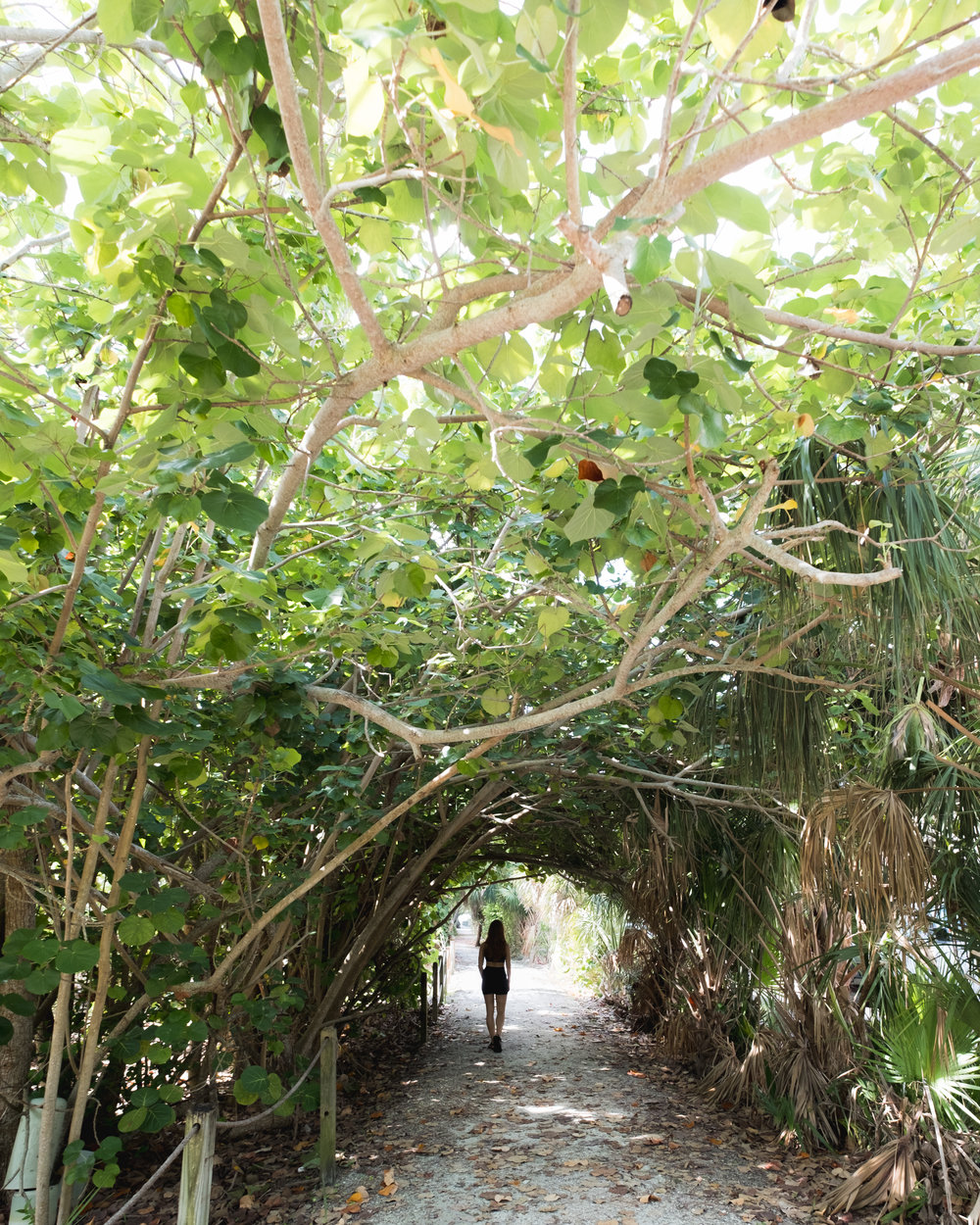 Exploring the wild tunnels on Sanibel, right off the bike path.