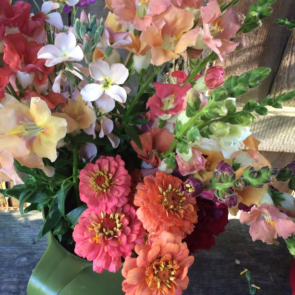 Bucket of blooms - zinnias, snapdragons, stocks