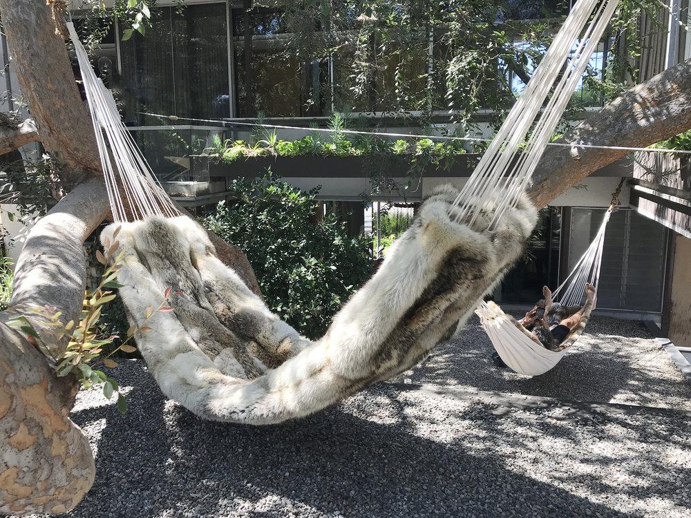 bless-hammock.jpg