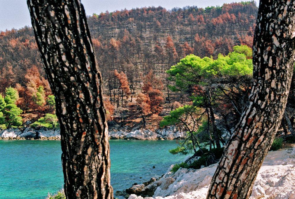 Two trees, 35mm, Skopelos, 2018