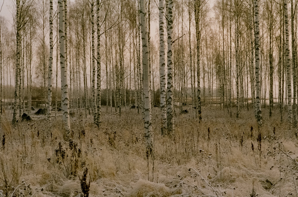 Forest, 35mm, Nelimarkka Museo, 2018