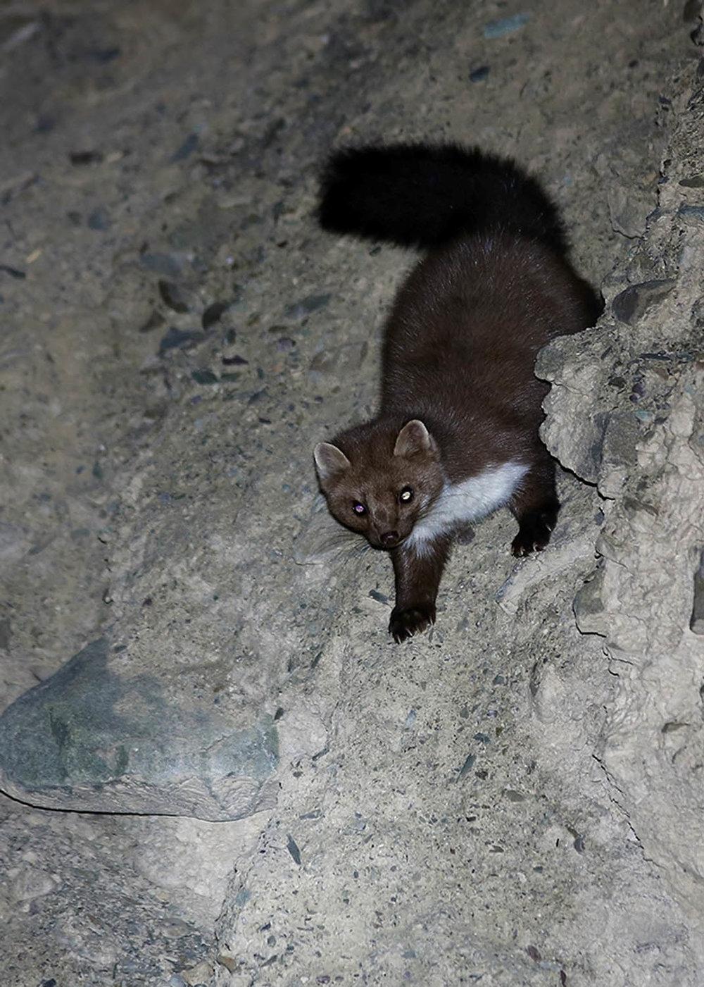 Wildlifesafaris_mammalwatching_5.jpg