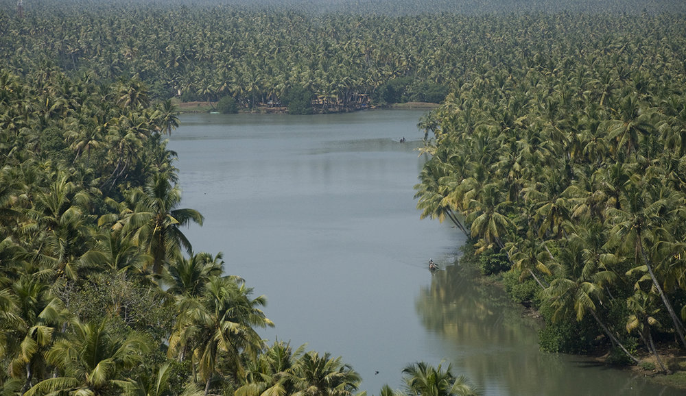 Kerala_coconut.jpg
