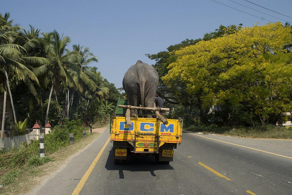 Kerala_ele.jpg