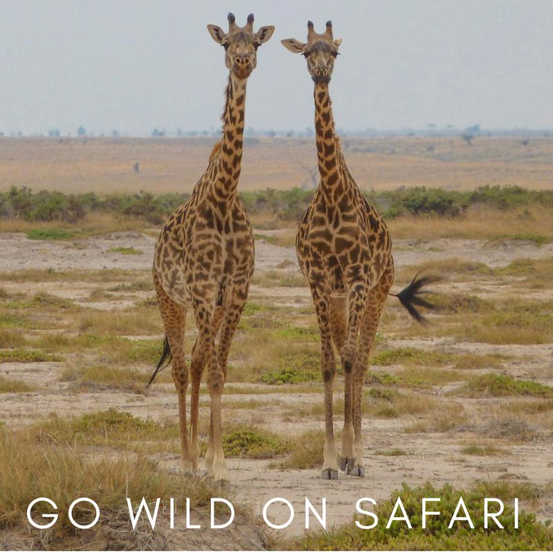 Curio Trips Experiences - Safari.png