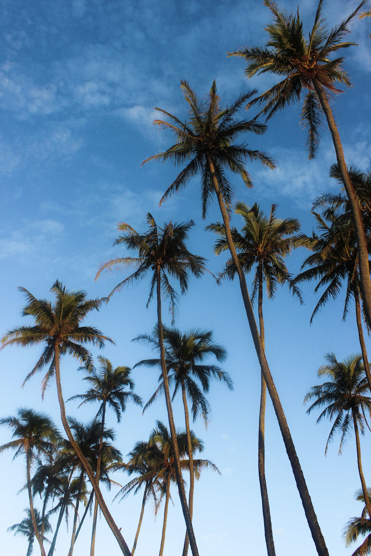 curio.trips.hawaii.sunrise.palmtrees.jpg