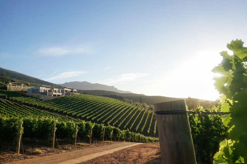 curio.trips.south.africa.winelands.sunset.view.jpg