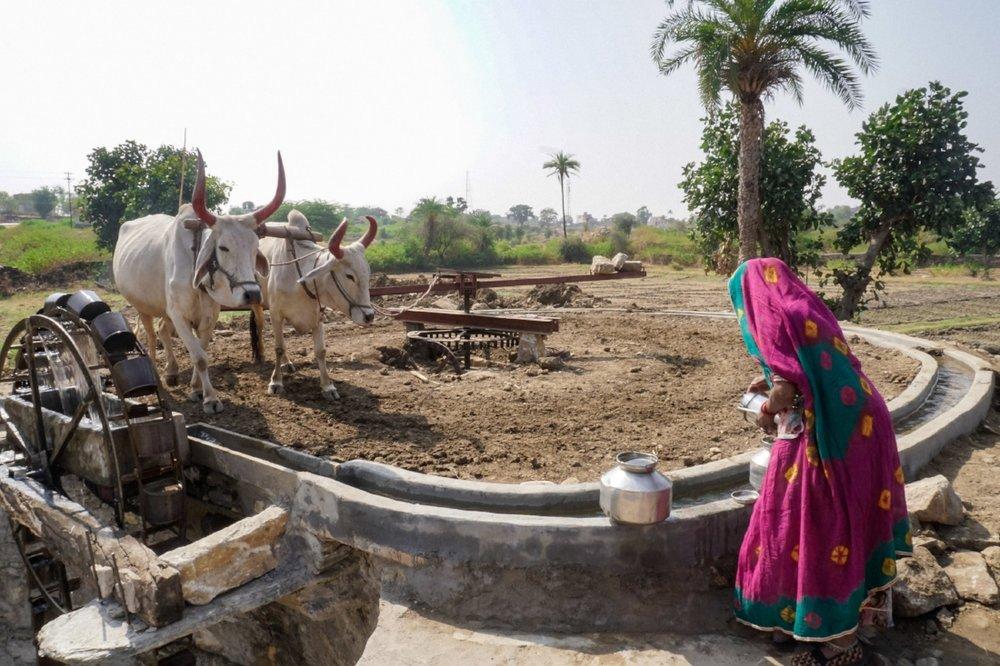 curio.trips.india.rajasthan.woman.water.wheel.jpg