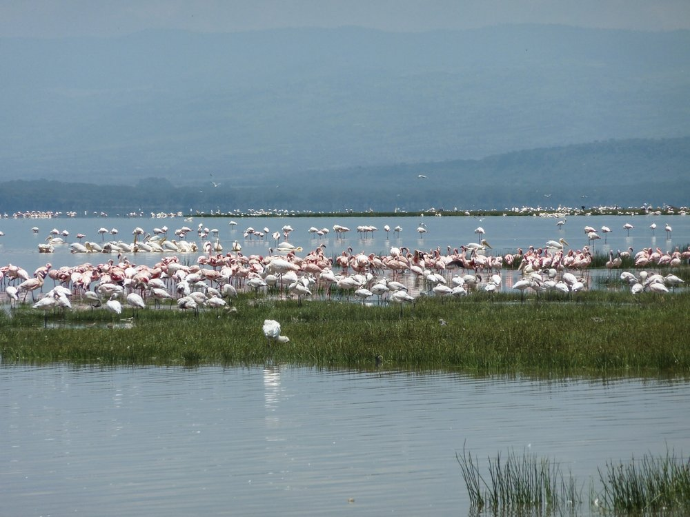 curio.trips.kenya.flamingo.lake.jpg