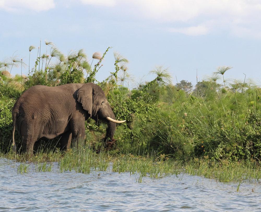 curio.trips.rwanda.akagera.np.elephant.lake.jpg