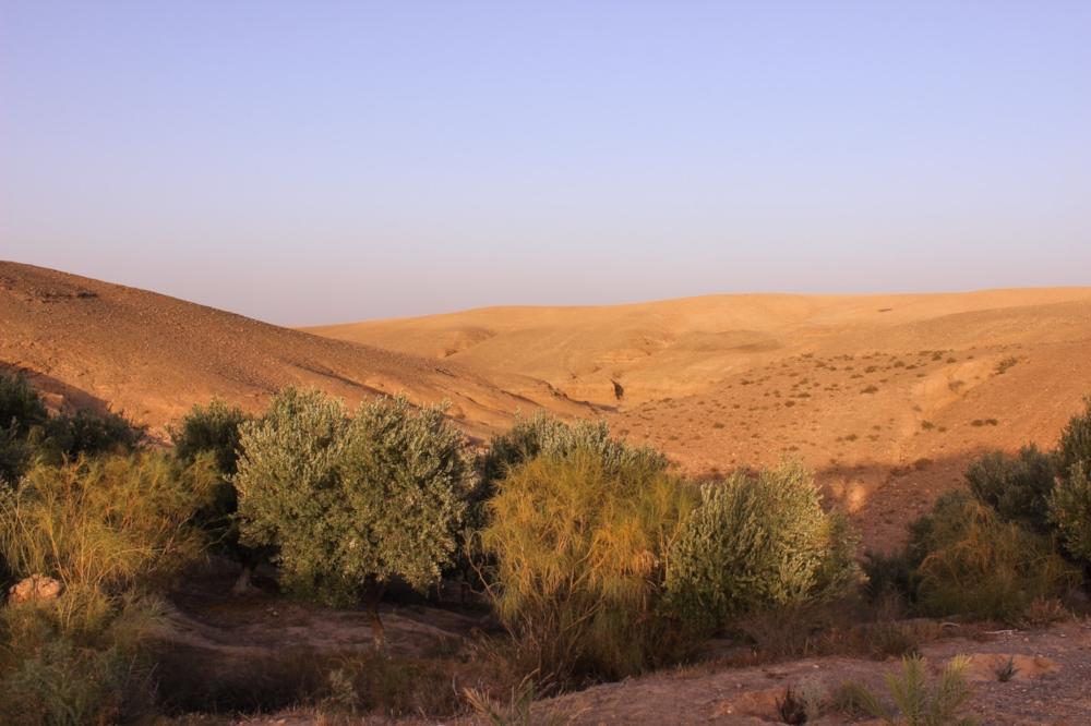 curio.trips.morocco.4.jpg