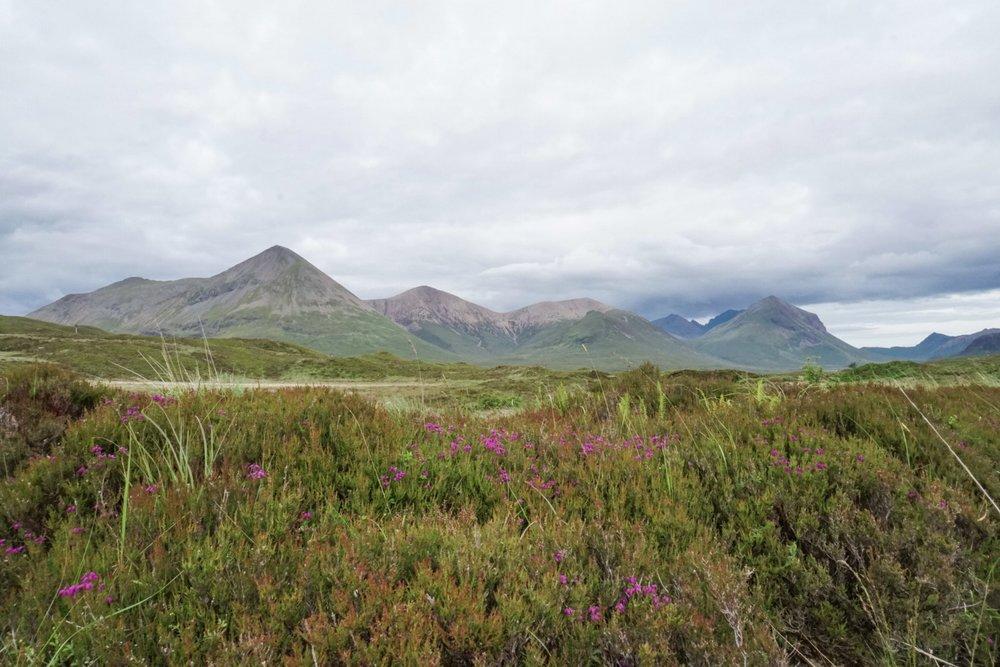 curio.trips.scotland.isle.of.sky.mountains.wildflowers.jpg