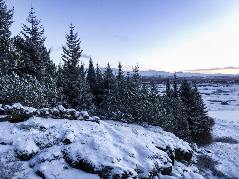 curio.trips.iceland.winter.alpine.forest.jpg