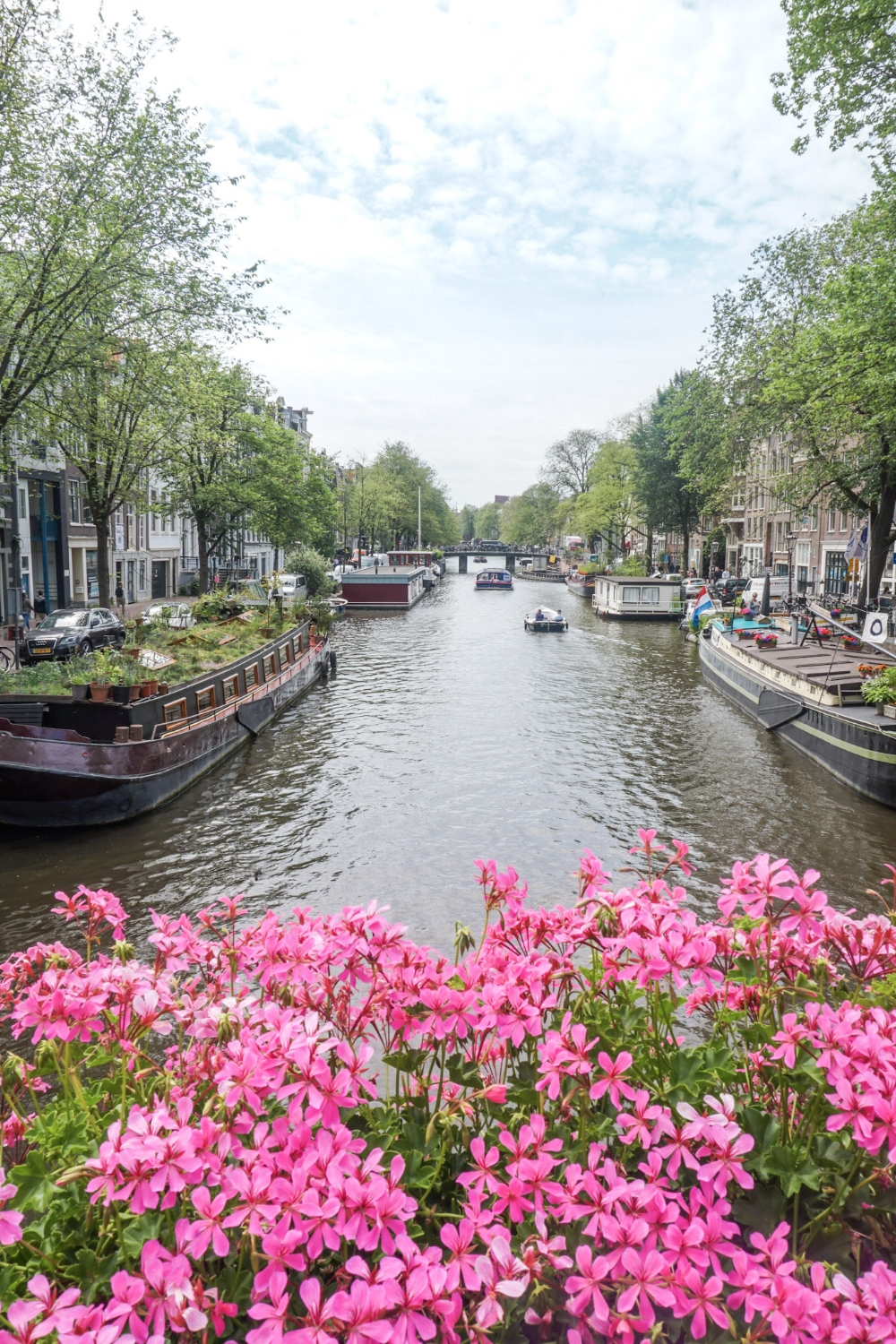 curio.trips.amsterdam.canal.pink.flowers.1.jpg