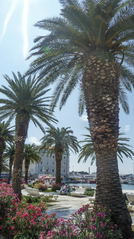 curio.trips.croatia.palms.jpg