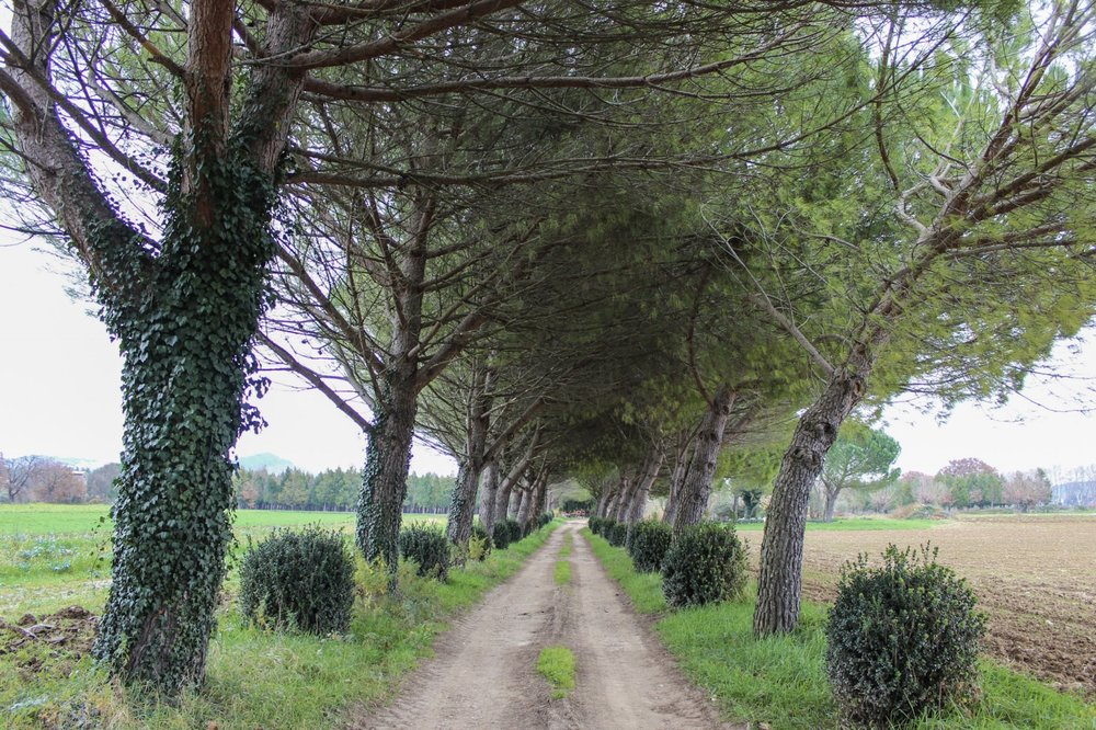 curio.trips.provence.trees.jpg