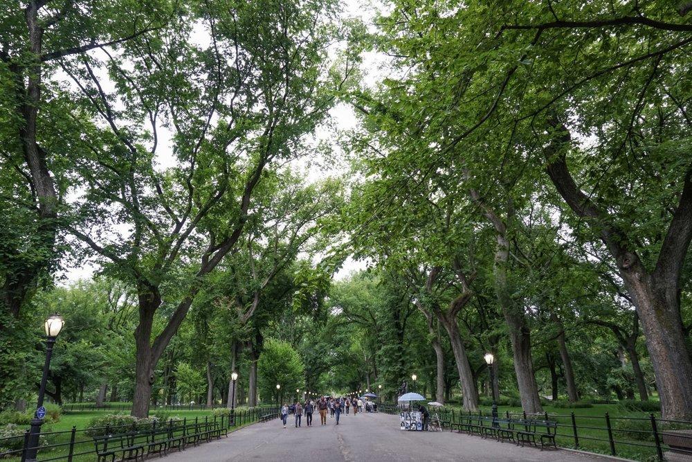 curio.trips.usa.nyc.central.park.jpg