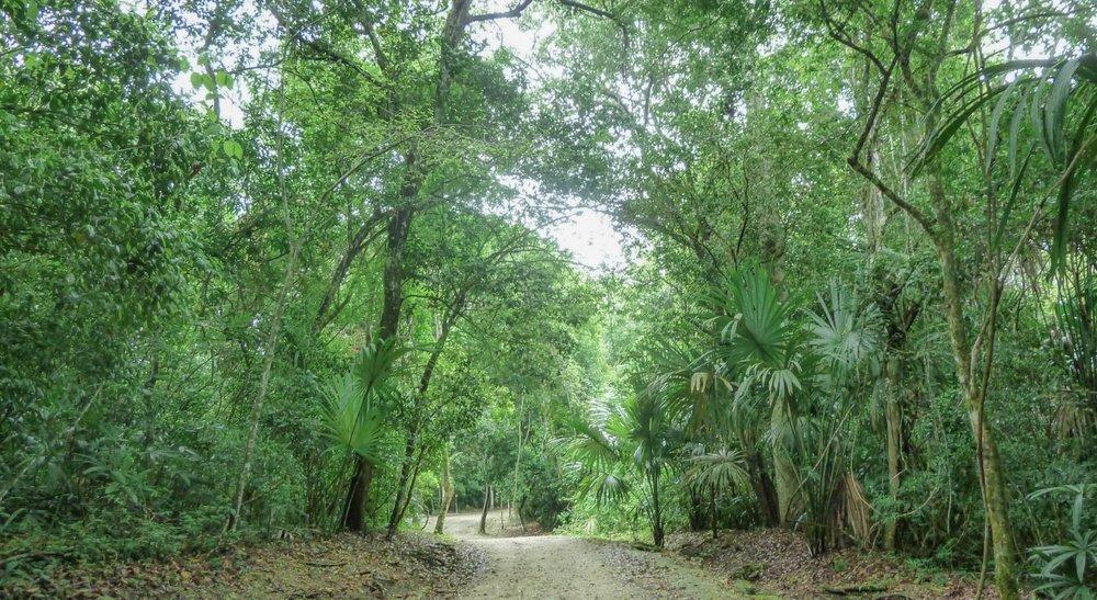curio.trips.guatemala.tikal.rainforest.jpg