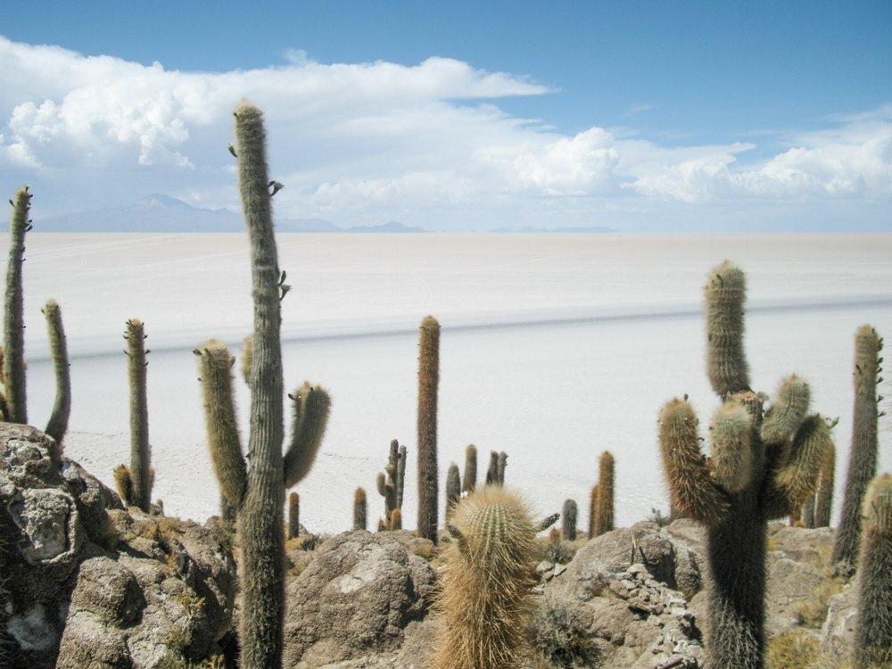 curio.trips.bolivia.salt.flats.jpg