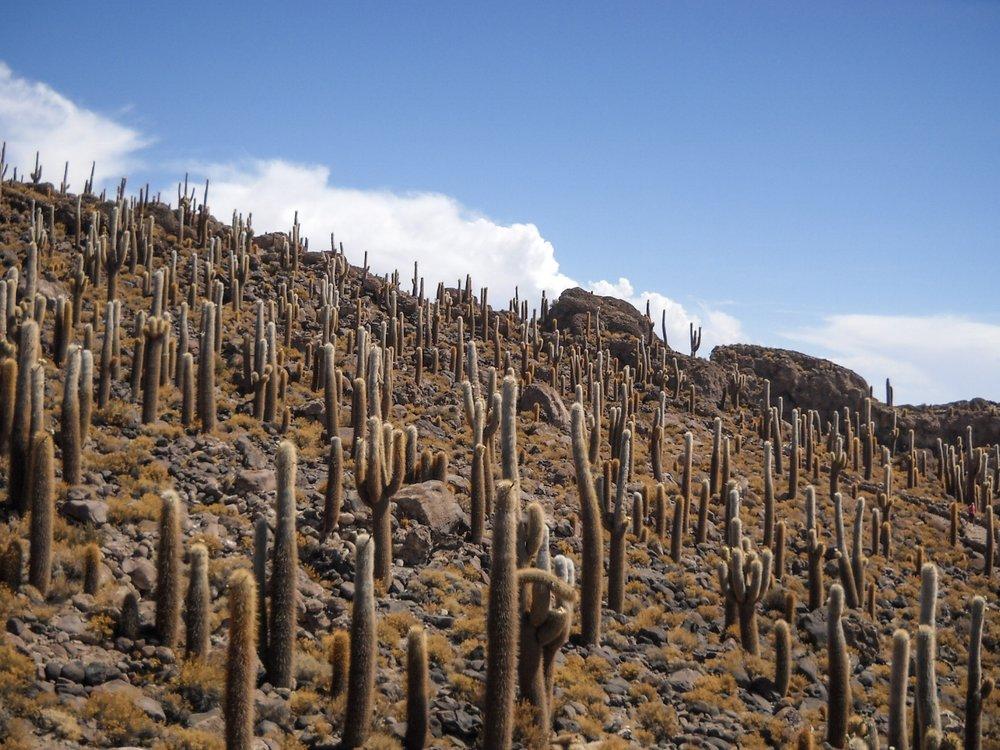 curio.trips.bolivia.salt.flats.cacti.jpg