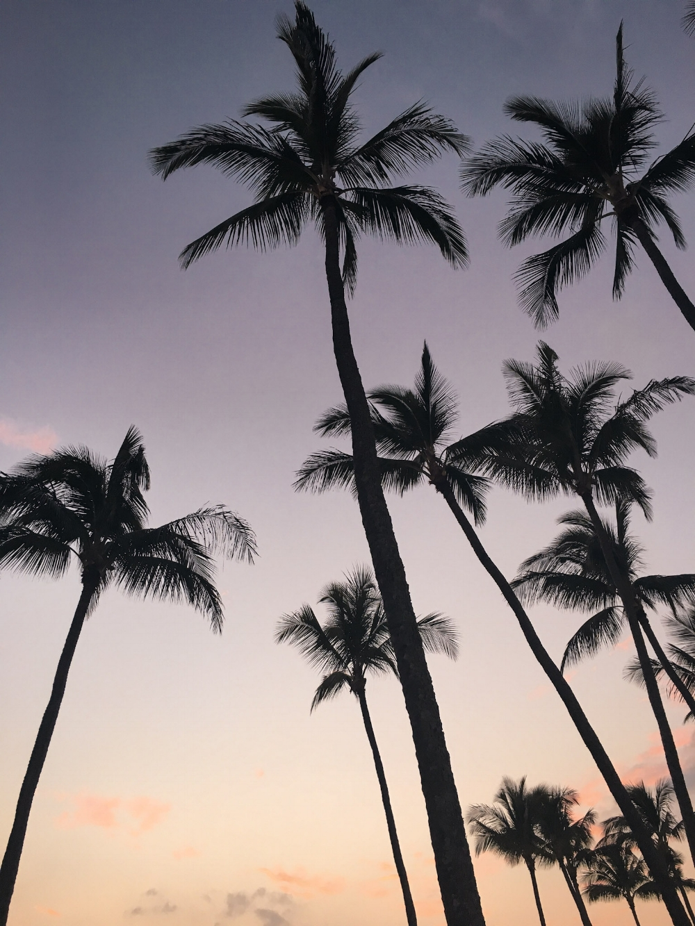 curio.trips.hawaii.palm.sunset.jpg
