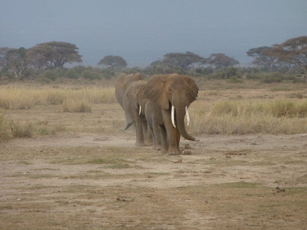 WATCH ANIMALS IN THE WILD ON SAFARI