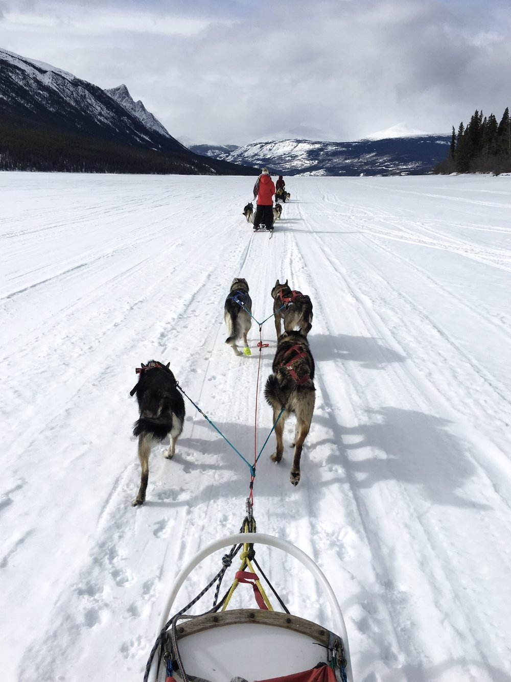 DOGSLED & SNOW MOBILE THROUGH WINTER