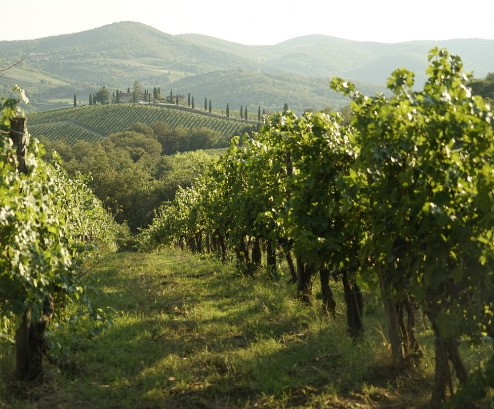 WINE TASTE THROUGH TUSCANY