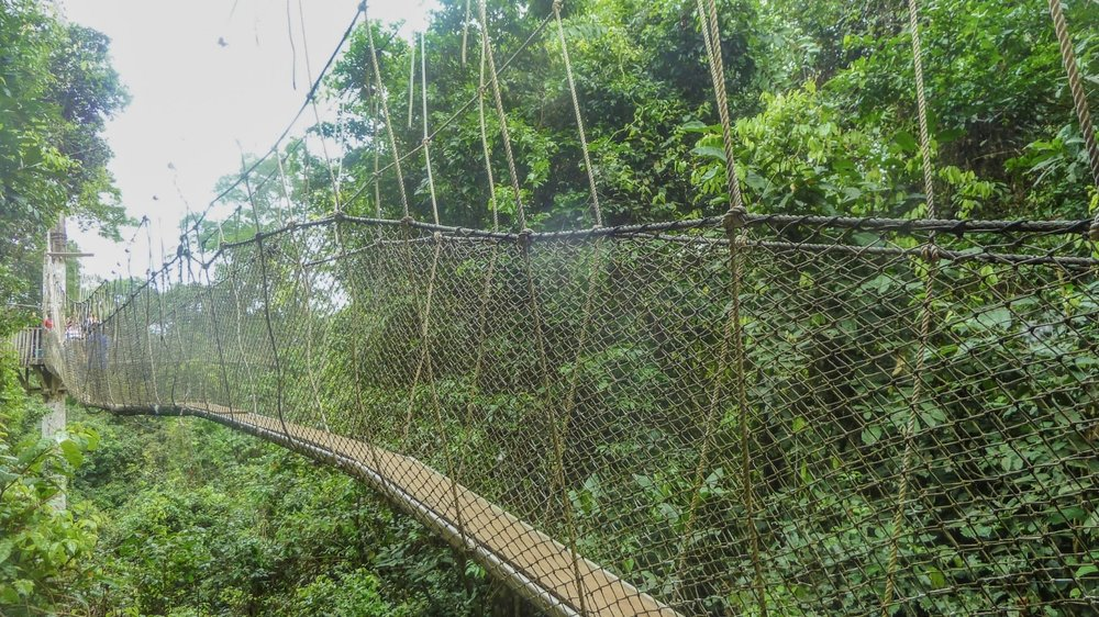 ZIPLINE THE RAINFORESTS OF COSTA RICA